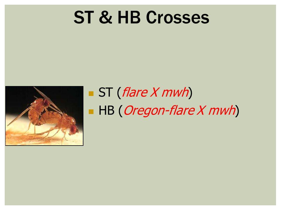 ST (flare X mwh) HB (Oregon-flare X mwh) ST & HB Crosses