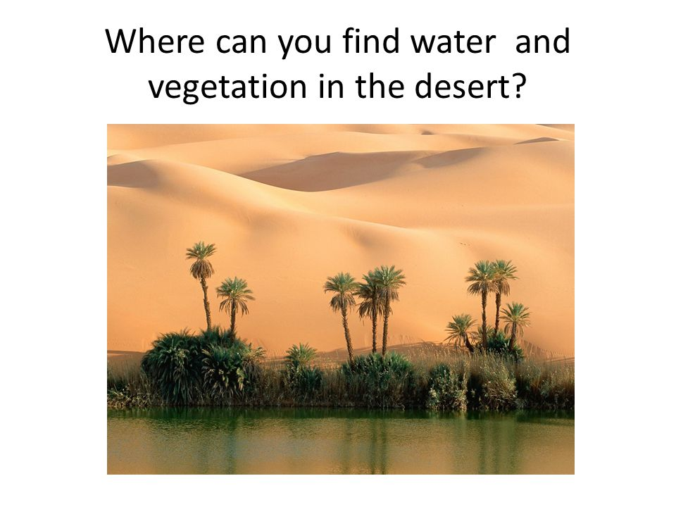 Where can you find water and vegetation in the desert