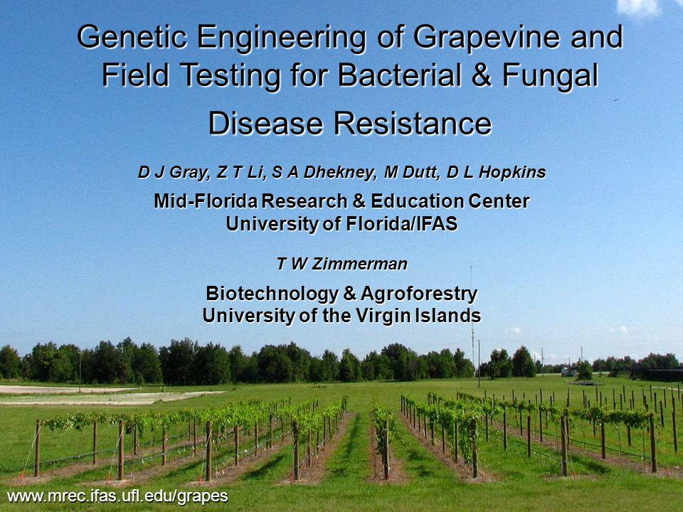 The Florida Field Site www.mrec.ifas.ufl.edu/grapes 'Thompson Seedless', June 2007