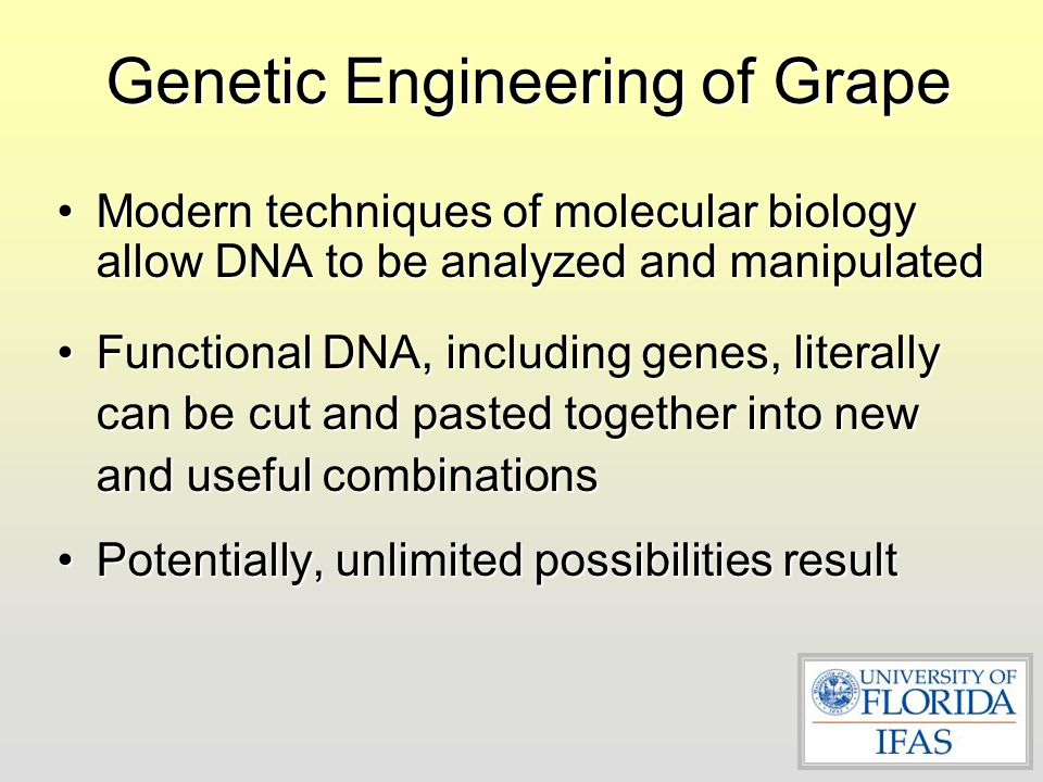 Genetic Engineering of Grape Modern techniques of molecular biology allow DNA to be analyzed and manipulatedModern techniques of molecular biology all