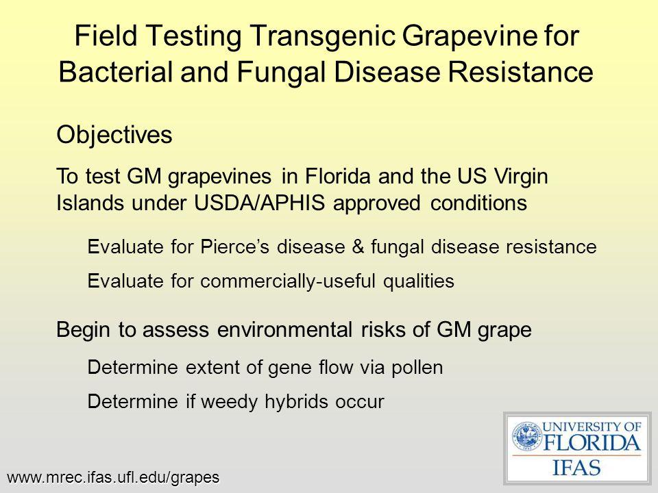 The Florida Field Site www.mrec.ifas.ufl.edu/grapes July 6, 2007