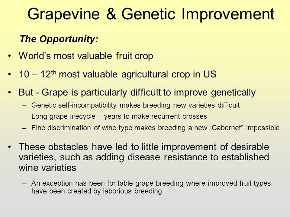 Grapevine & Genetic Improvement World's most valuable fruit cropWorld's most valuable fruit crop 10 – 12 th most valuable agricultural crop in US10 –