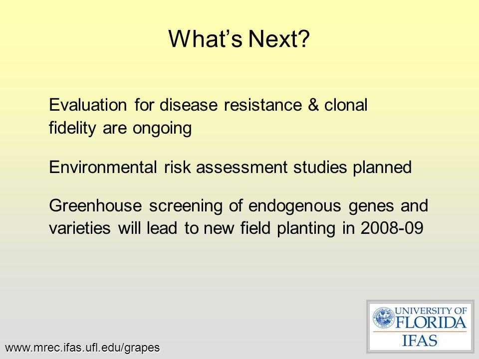 What's Next? Evaluation for disease resistance & clonal fidelity are ongoing Environmental risk assessment studies planned Greenhouse screening of end
