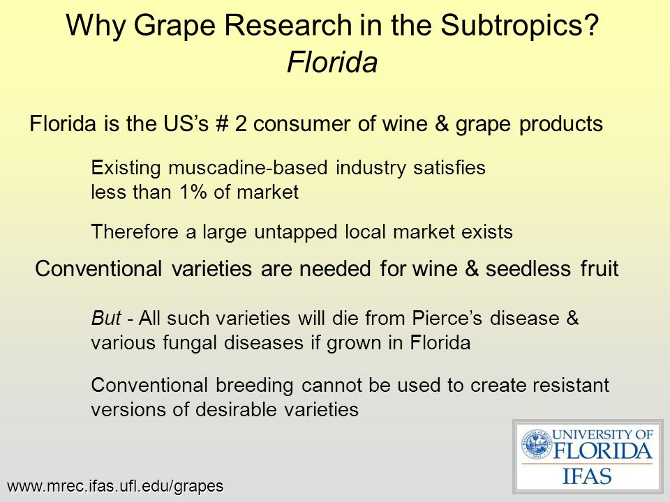 Why Grape Research in the Subtropics? Florida Conventional varieties are needed for wine & seedless fruit But - All such varieties will die from Pierc