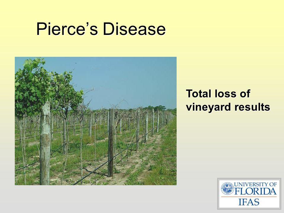 Pierce's Disease Tolerant Vines
