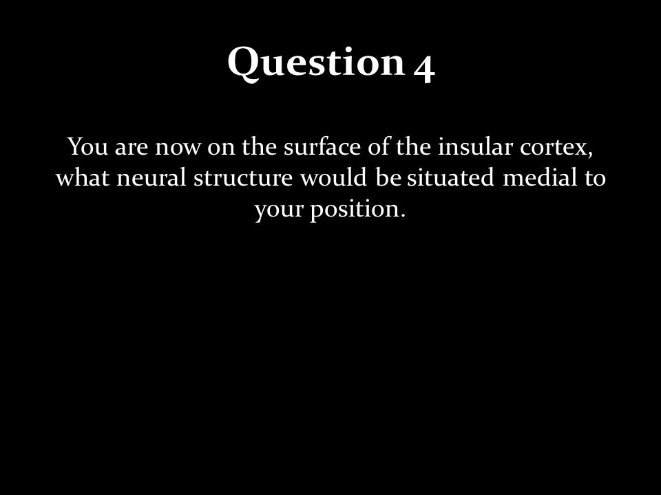 Question 4 You are now on the surface of the insular cortex, what neural structure would be situated medial to your position.