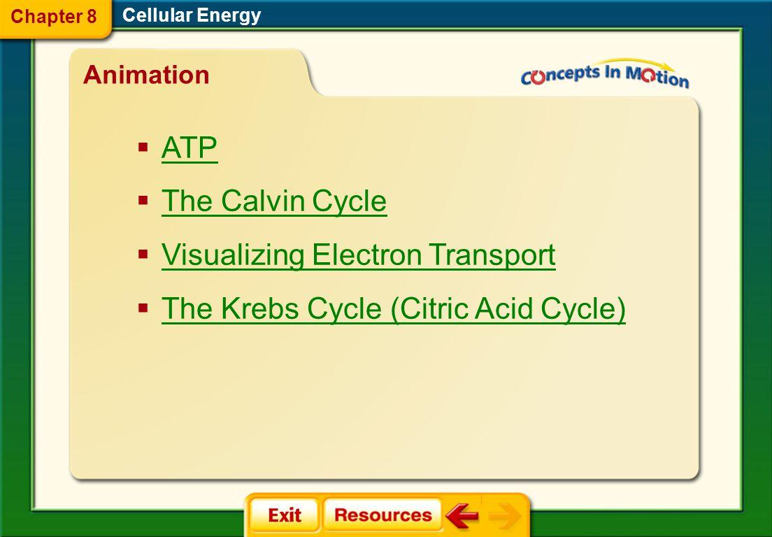 anaerobic process aerobic respiration aerobic process glycolysis Krebs cycle fermentation Cellular Energy Chapter 8 Vocabulary Section 3