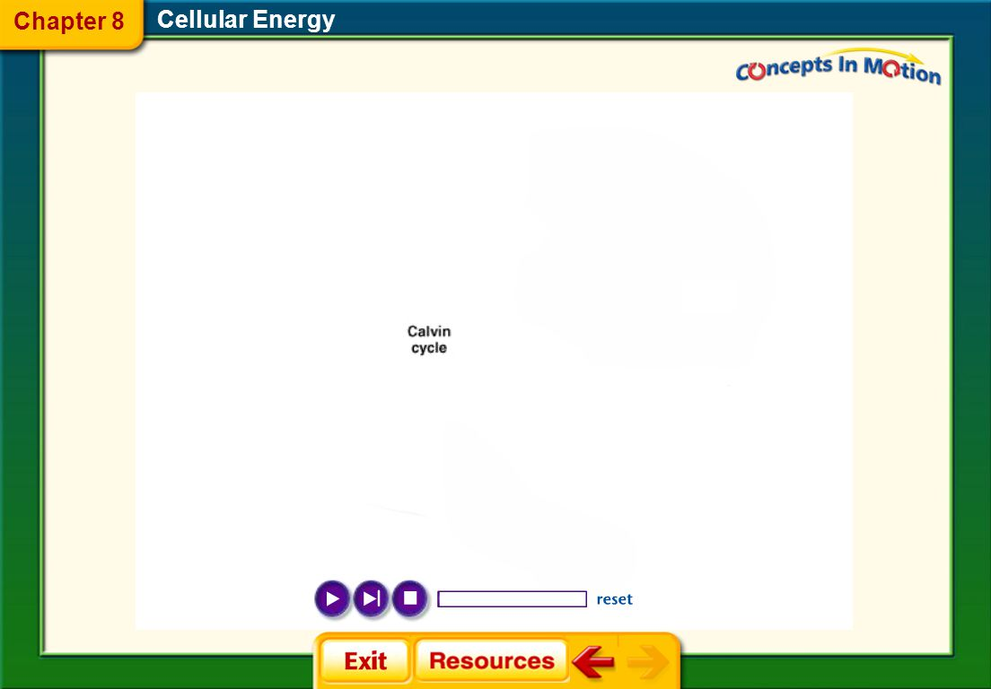 Cellular Energy  ATP ATP  The Calvin Cycle The Calvin Cycle  Visualizing Electron Transport Visualizing Electron Transport  The Krebs Cycle (Citric Acid Cycle) The Krebs Cycle (Citric Acid Cycle) Animation Chapter 8