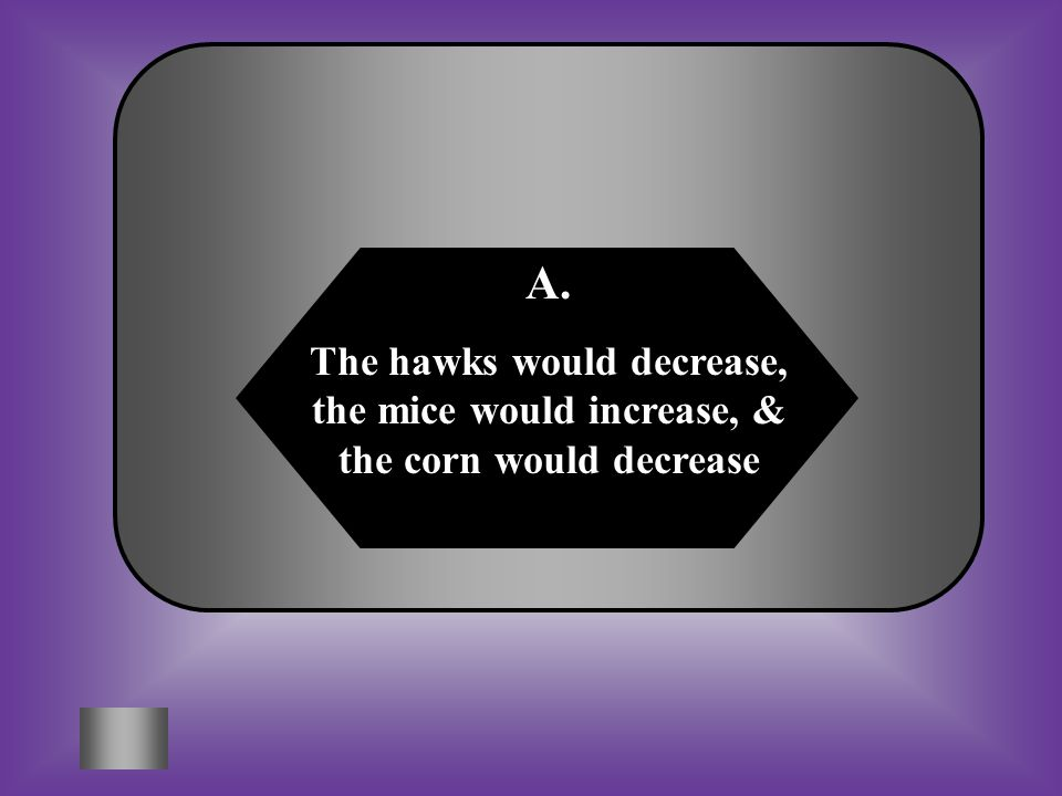 A:B: The hawks would decrease, the mice would increase, & the corn would decrease The hawks would increase, the mice would decrease, & the corn would increase C:D: Both of theseNeither of these What would happen in this food chain if a disease killed off most of the snakes.