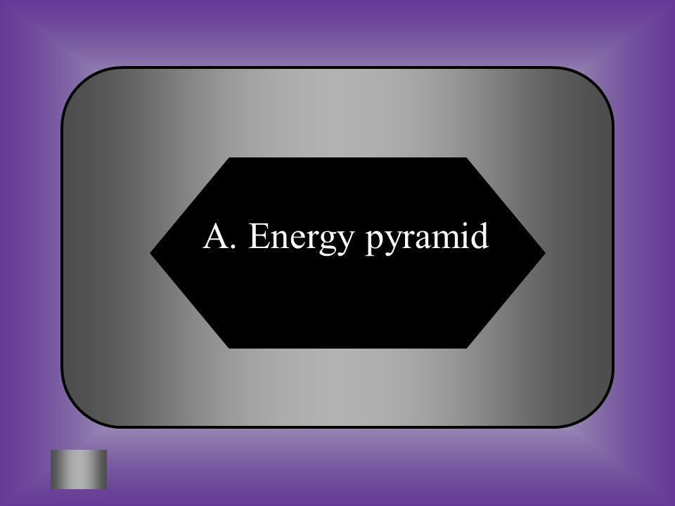 A:B: Energy pyramidDecomposer pyramid C:D: Producer pyramidHerbivore pyramid #1 Producers, Primary Consumers, Secondary Consumers, & Tertiary Consumers are the four layers of this __________________..