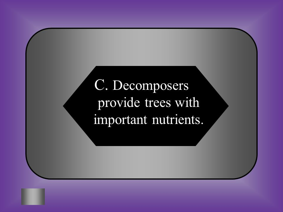 A:B: Decomposers kill trees as a means of controlling tree populations Decomposers are not necessary for the growth of trees C:D: Decomposers provide trees have important nutrients None of these #15 What important roll do decomposers play in the growth of trees in a forest