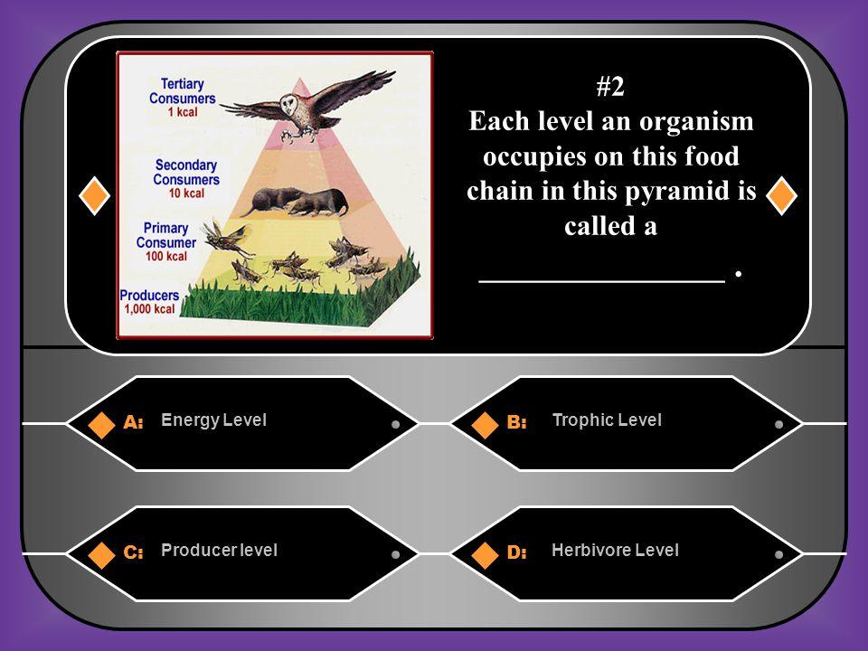 A. Energy pyramid