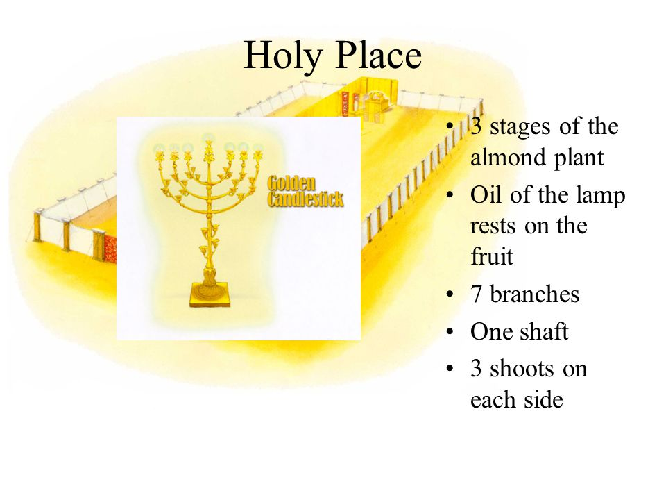3 stages of the almond plant Oil of the lamp rests on the fruit 7 branches One shaft 3 shoots on each side Holy Place
