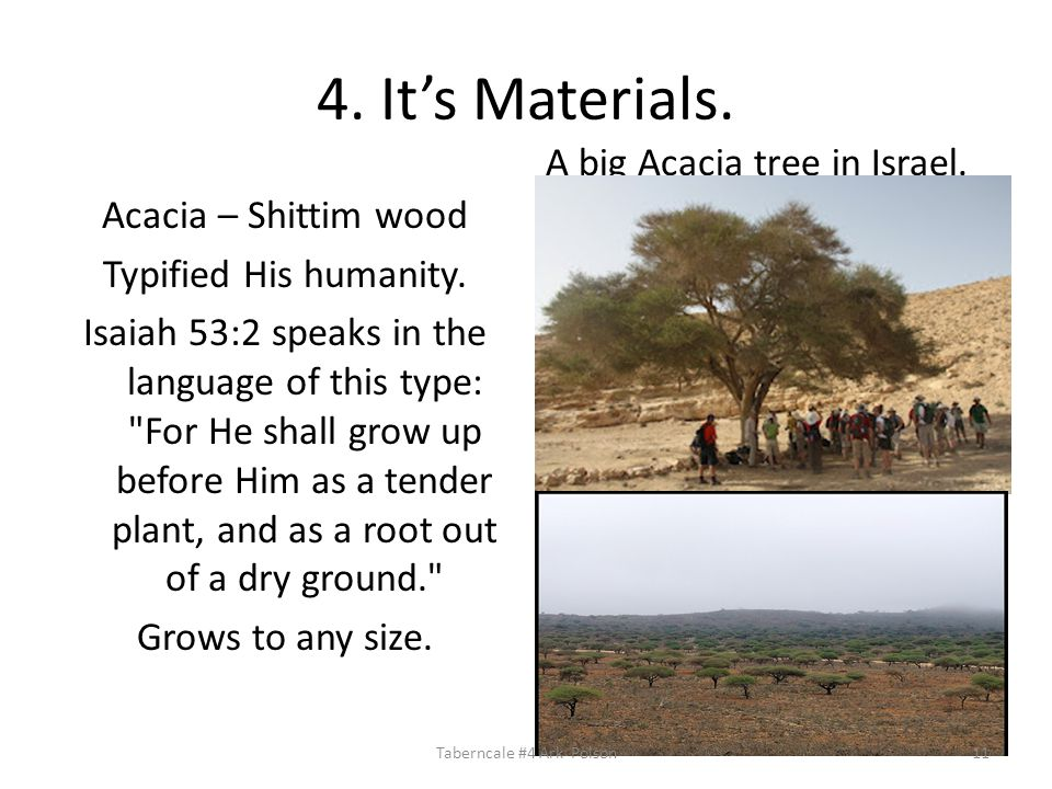 4. It's Materials. Acacia – Shittim wood Typified His humanity.
