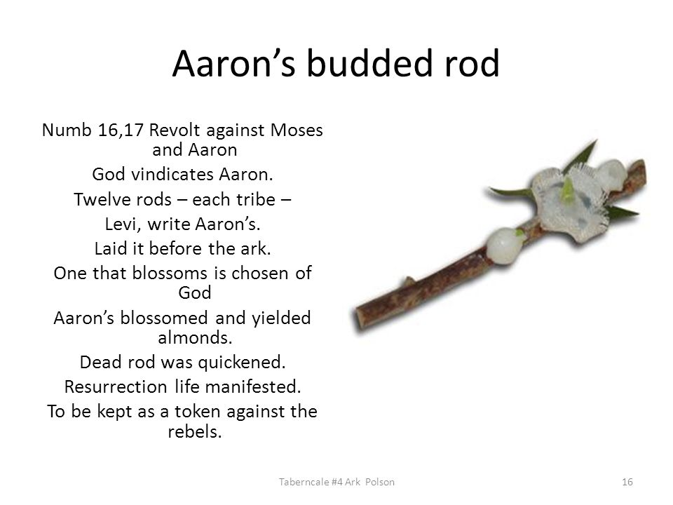Aaron's budded rod Numb 16,17 Revolt against Moses and Aaron God vindicates Aaron.