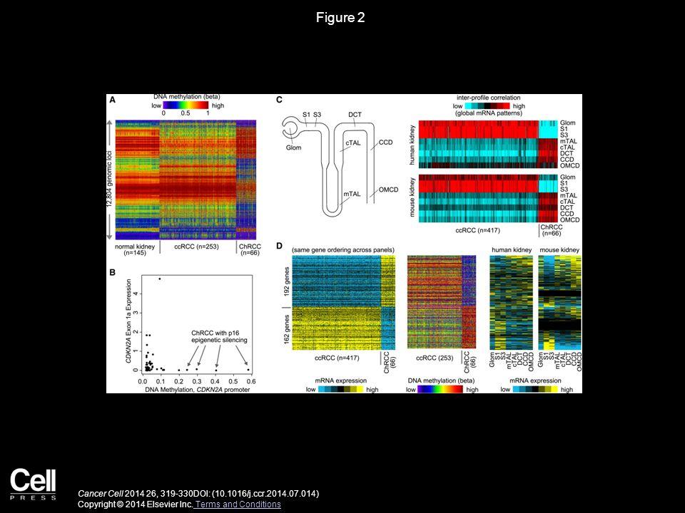 Figure 2 Cancer Cell 2014 26, 319-330DOI: (10.1016/j.ccr.2014.07.014) Copyright © 2014 Elsevier Inc.