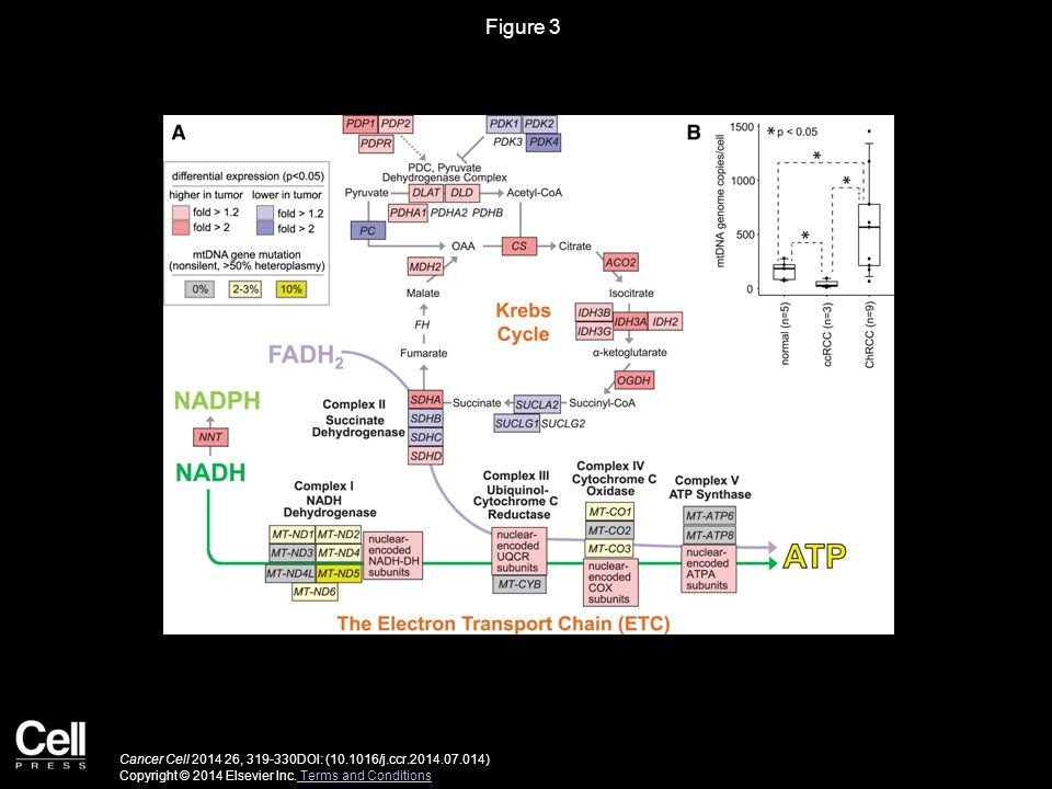 Figure 3 Cancer Cell 2014 26, 319-330DOI: (10.1016/j.ccr.2014.07.014) Copyright © 2014 Elsevier Inc.