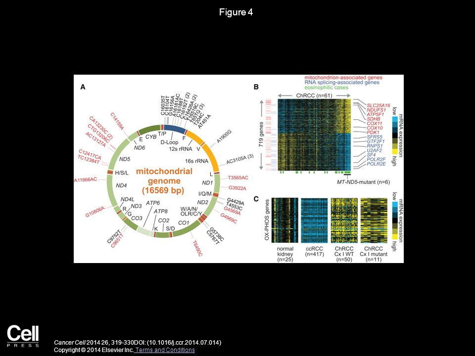Figure 4 Cancer Cell 2014 26, 319-330DOI: (10.1016/j.ccr.2014.07.014) Copyright © 2014 Elsevier Inc.