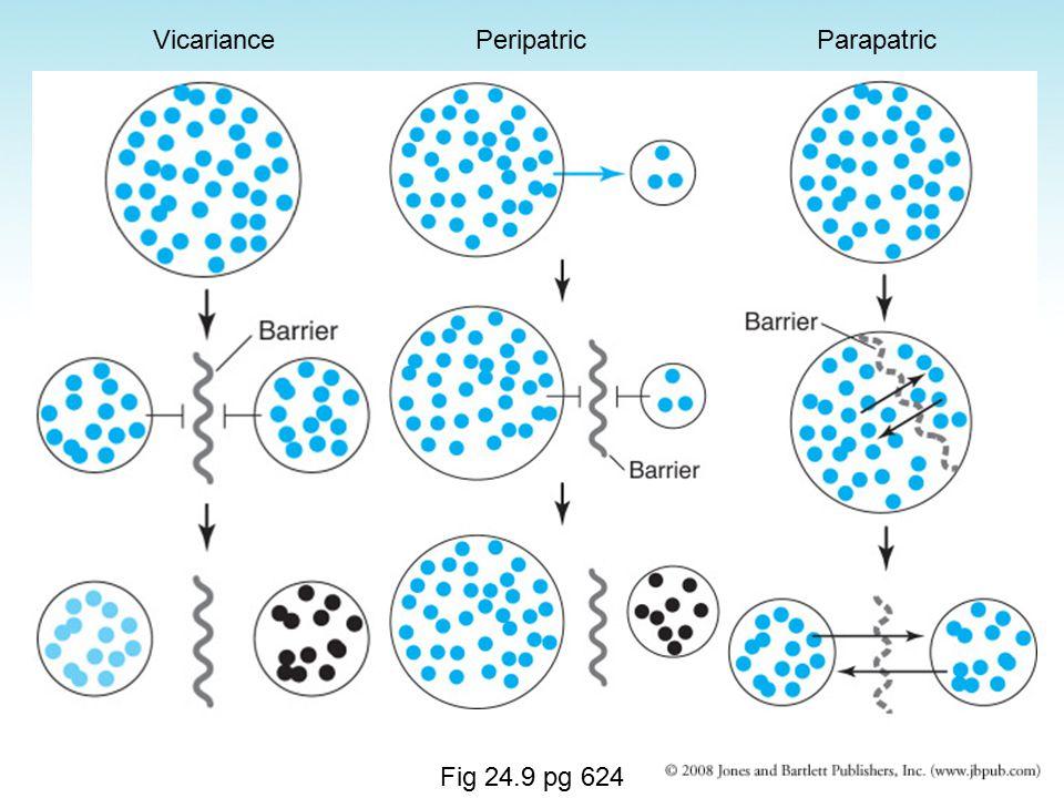 Fig 24.9 pg 624 VicariancePeripatricParapatric