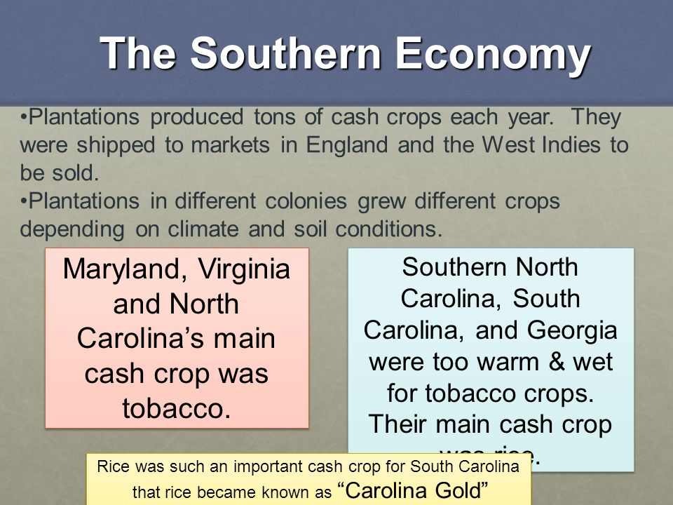 The Southern Economy Plantations produced tons of cash crops each year. They were shipped to markets in England and the West Indies to be sold. Planta