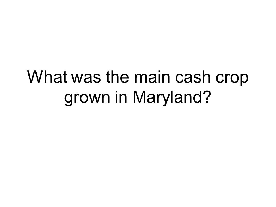 What was the main cash crop grown in Maryland