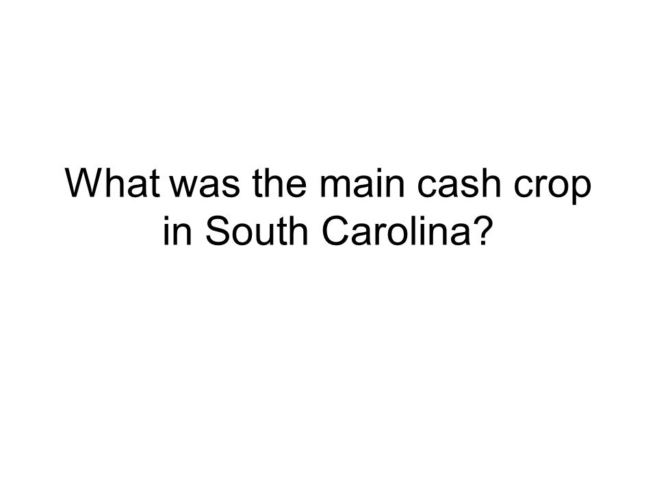 What was the main cash crop in South Carolina