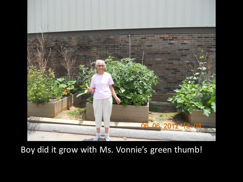 Boy did it grow with Ms. Vonnie's green thumb!