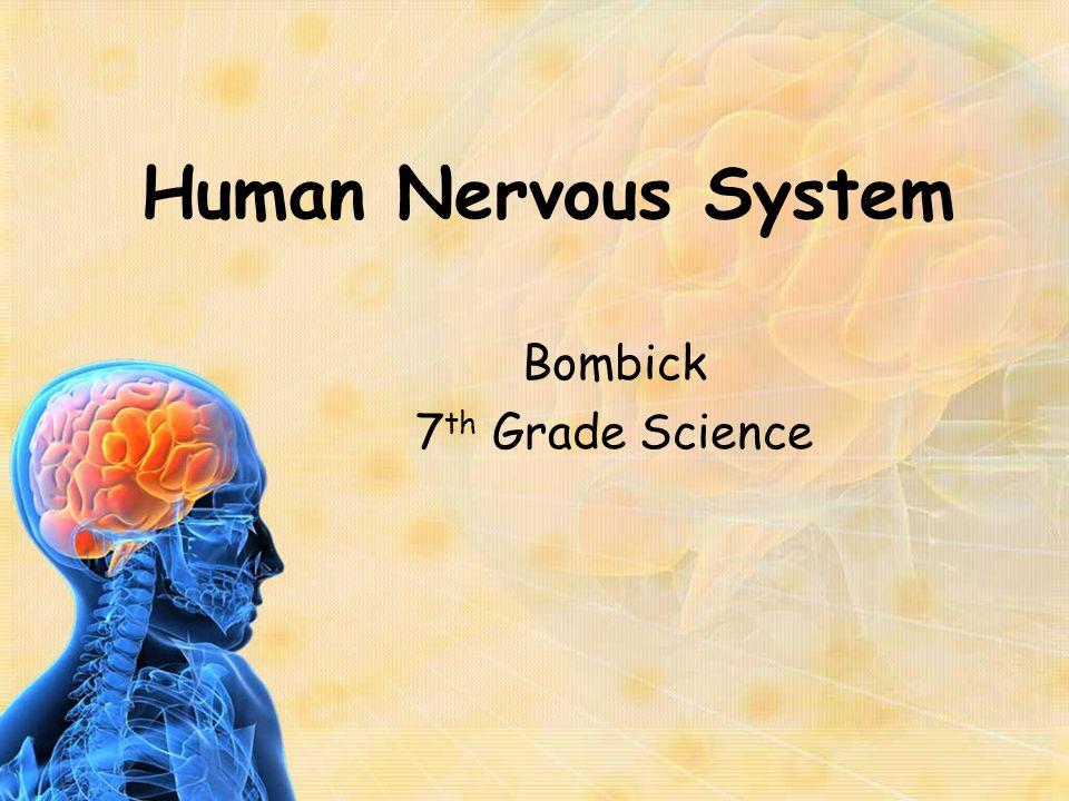 Outline of Presentation A.Nerve Cell Biology 1. Anatomy 2.