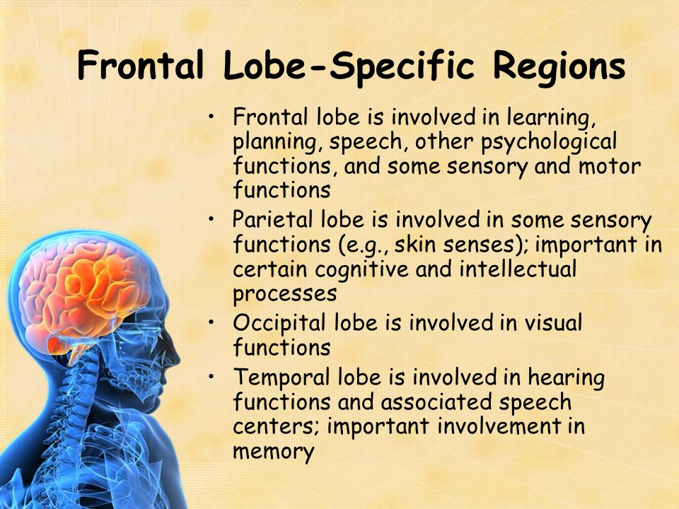 Frontal Lobe-Specific Regions Frontal lobe is involved in learning, planning, speech, other psychological functions, and some sensory and motor functi