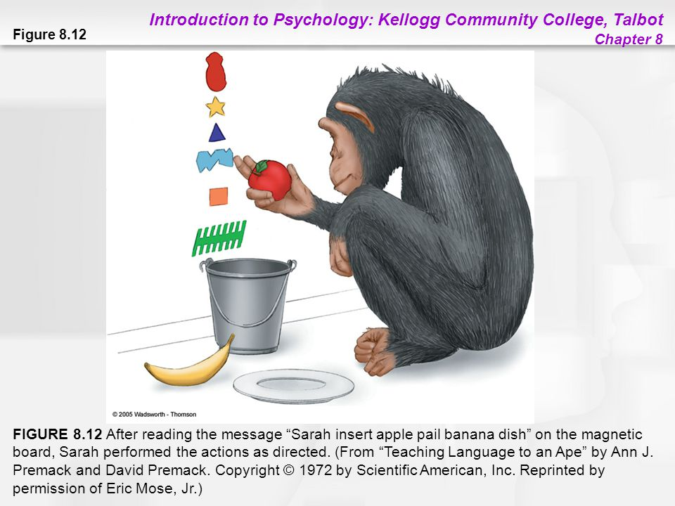 """Introduction to Psychology: Kellogg Community College, Talbot Chapter 8 Figure 8.12 FIGURE 8.12 After reading the message """"Sarah insert apple pail ban"""