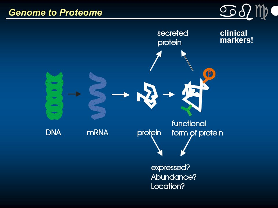 abclt Genome to Proteome