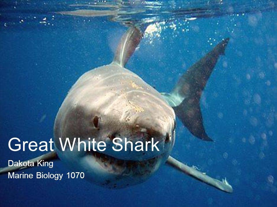 Great White Shark Dakota King Marine Biology 1070