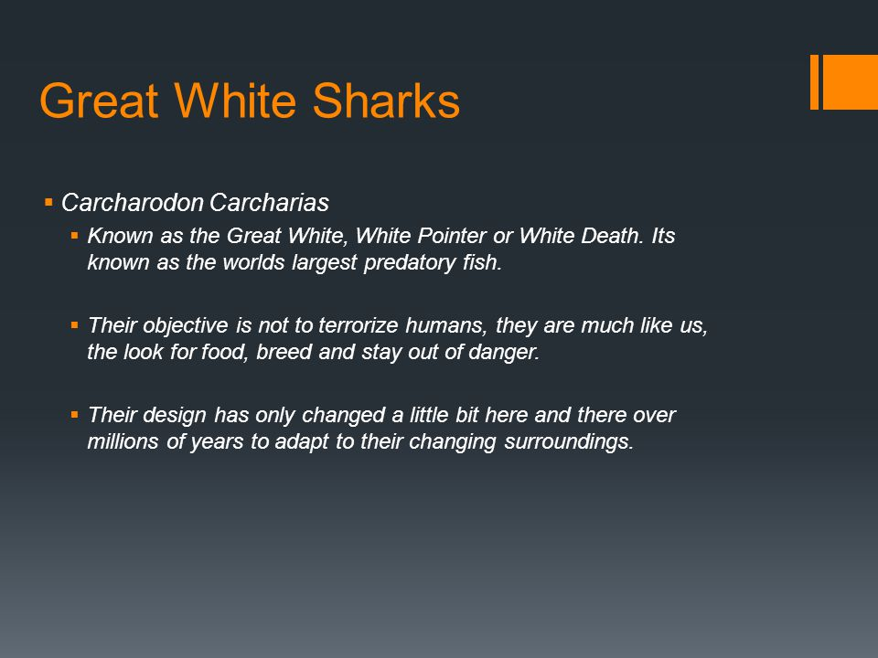 Great White Sharks  Carcharodon Carcharias  Known as the Great White, White Pointer or White Death.