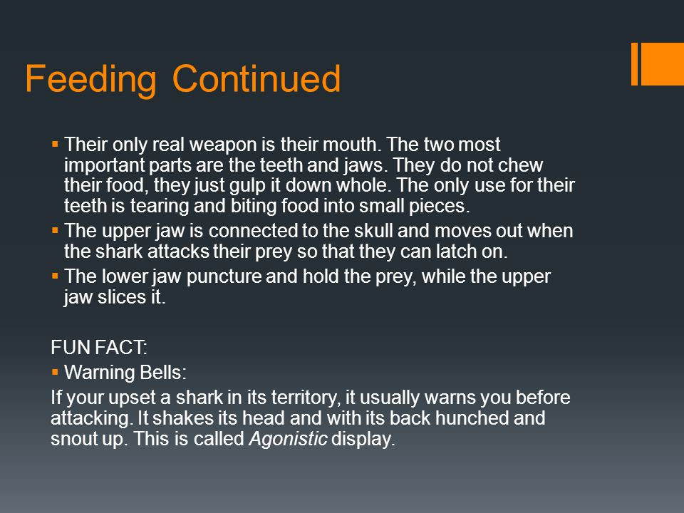 Feeding Continued  Their only real weapon is their mouth. The two most important parts are the teeth and jaws. They do not chew their food, they just