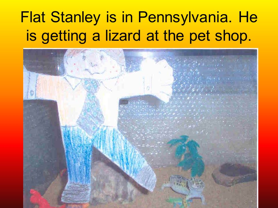 Flat Stanley is in Pennsylvania. He is getting a lizard at the pet shop.