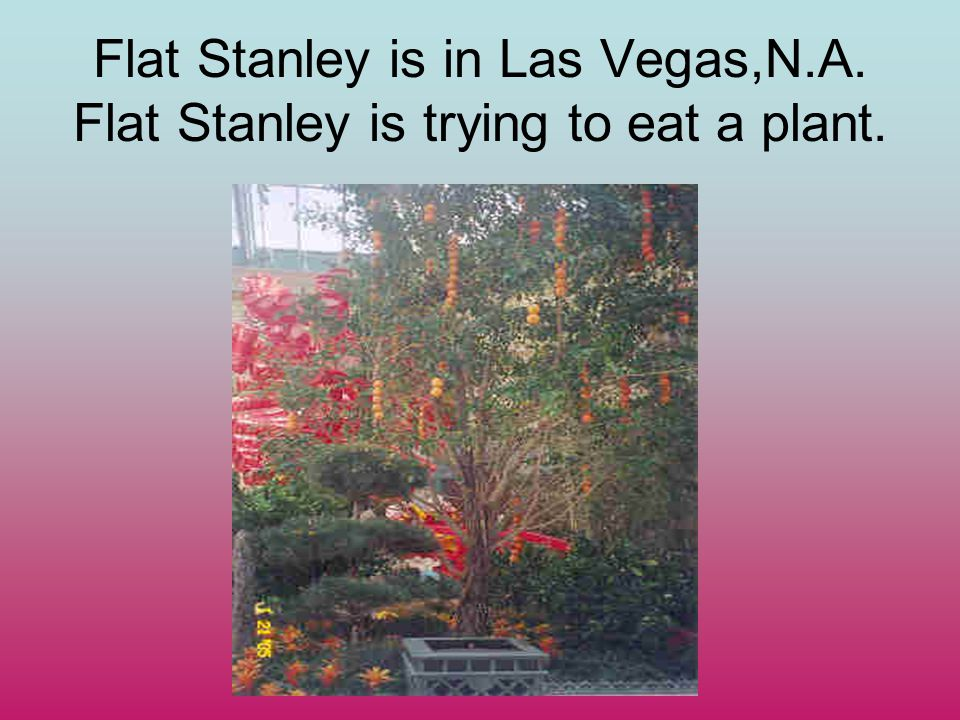 Flat Stanley is in Las Vegas,N.A. Flat Stanley is trying to eat a plant.
