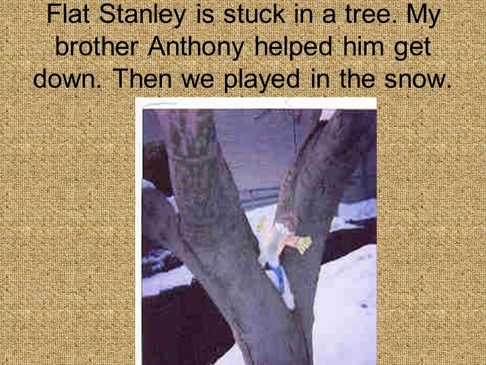 Flat Stanley is stuck in a tree. My brother Anthony helped him get down.