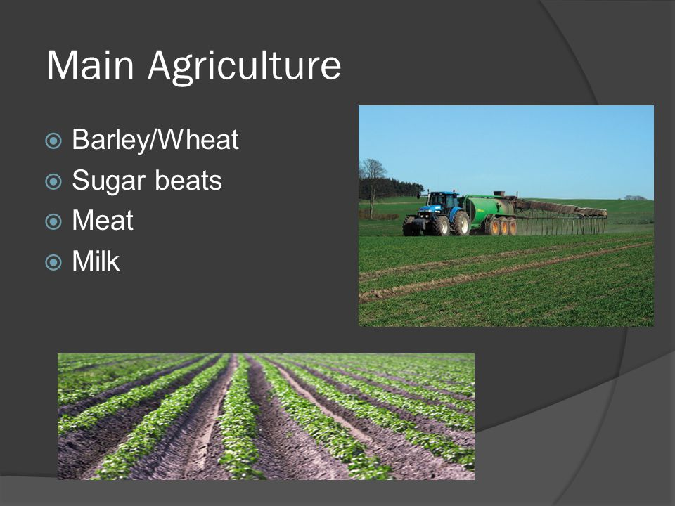 Main Agriculture  Barley/Wheat  Sugar beats  Meat  Milk