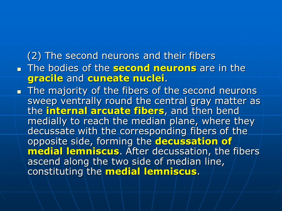 (2) The second neurons and their fibers (2) The second neurons and their fibers The bodies of the second neurons are in the gracile and cuneate nuclei