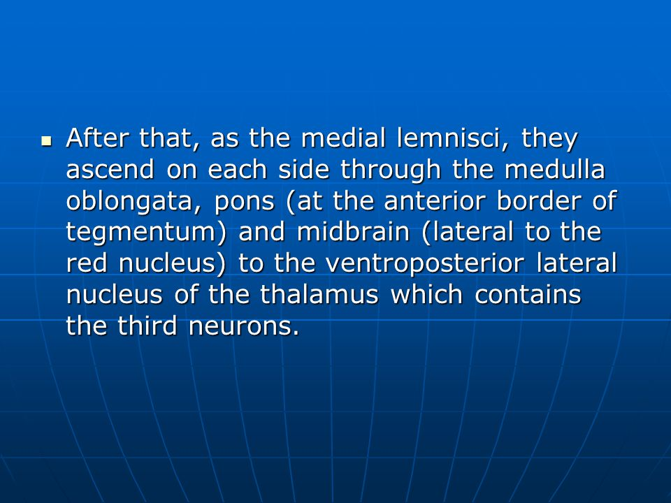 After that, as the medial lemnisci, they ascend on each side through the medulla oblongata, pons (at the anterior border of tegmentum) and midbrain (l