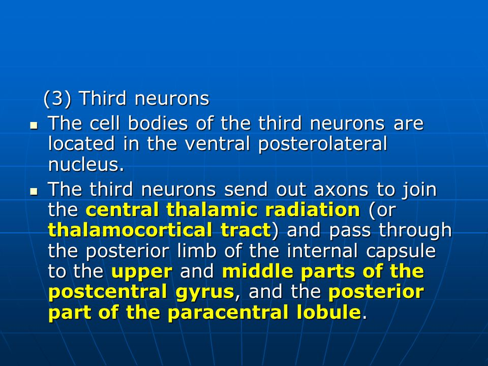 (3) Third neurons (3) Third neurons The cell bodies of the third neurons are located in the ventral posterolateral nucleus. The cell bodies of the thi