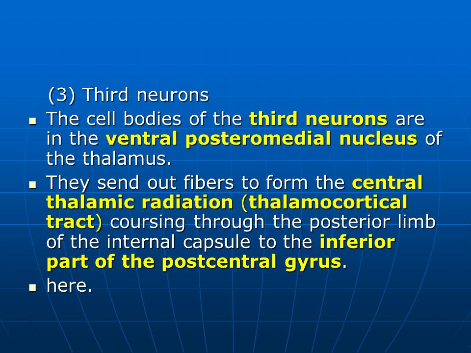 (3) Third neurons (3) Third neurons The cell bodies of the third neurons are in the ventral posteromedial nucleus of the thalamus. The cell bodies of