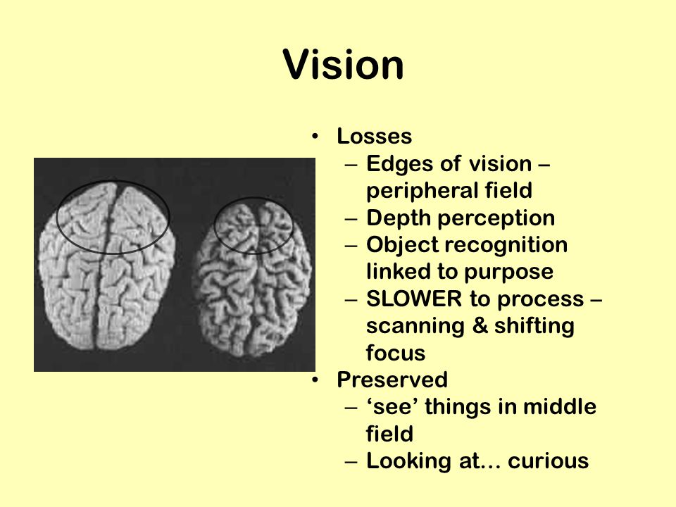 Vision Losses – Edges of vision – peripheral field – Depth perception – Object recognition linked to purpose – SLOWER to process – scanning & shifting focus Preserved – 'see' things in middle field – Looking at… curious