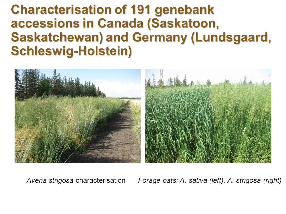 Characterisation of 191 genebank accessions in Canada (Saskatoon, Saskatchewan) and Germany (Lundsgaard, Schleswig-Holstein) Avena strigosa characterisationForage oats: A.