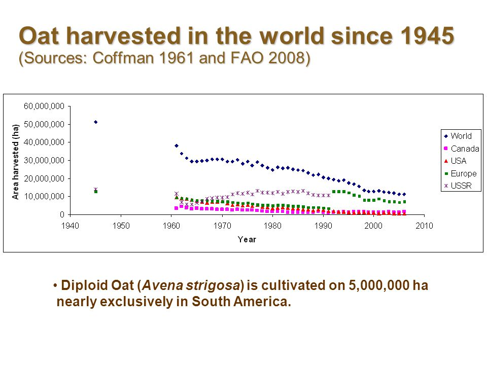 Oat harvested in the world since 1945 (Sources: Coffman 1961 and FAO 2008) Diploid Oat (Avena strigosa) is cultivated on 5,000,000 ha nearly exclusively in South America.