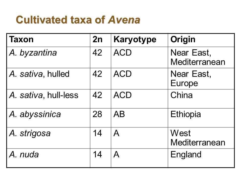Cultivated taxa of Avena Taxon2nKaryotypeOrigin A.