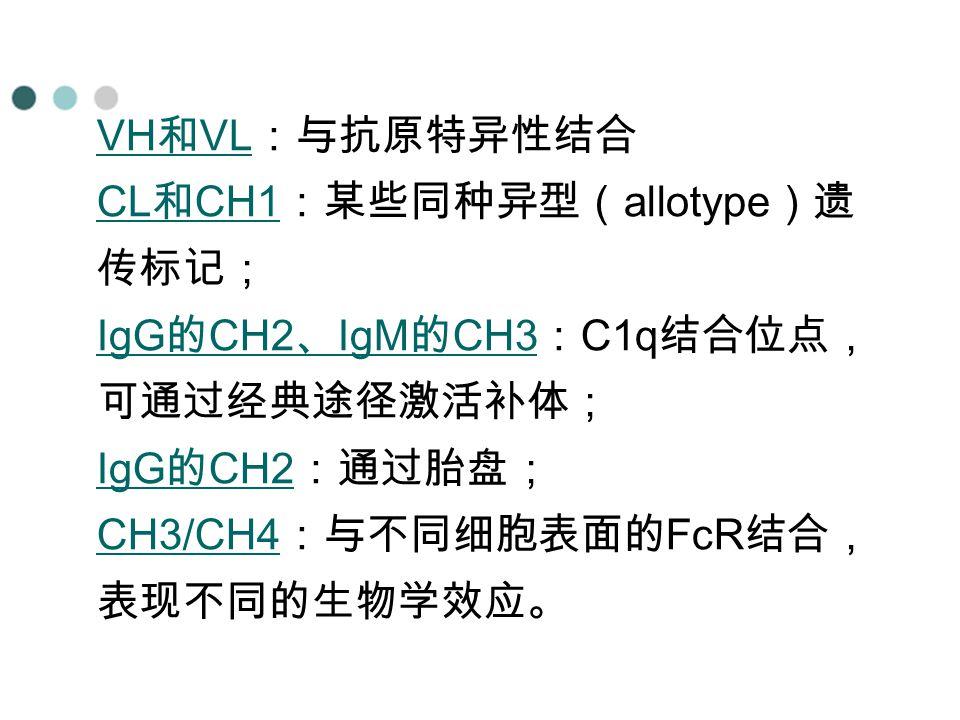 VH 和 VL VH 和 VL :与抗原特异性结合 CL 和 CH1 CL 和 CH1 :某些同种异型( allotype )遗 传标记; IgG 的 CH2 、 IgM 的 CH3 IgG 的 CH2 、 IgM 的 CH3 : C1q 结合位点, 可通过经典途径激活补体; IgG 的 CH2 I