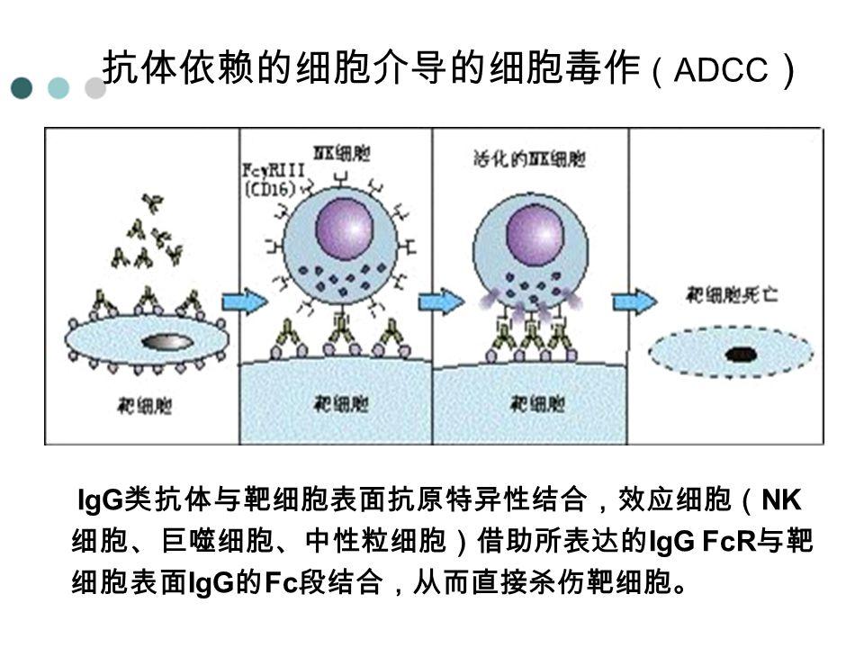抗体依赖的细胞介导的细胞毒作 ( ADCC ) IgG 类抗体与靶细胞表面抗原特异性结合,效应细胞( NK 细胞、巨噬细胞、中性粒细胞)借助所表达的 IgG FcR 与靶 细胞表面 IgG 的 Fc 段结合,从而直接杀伤靶细胞。