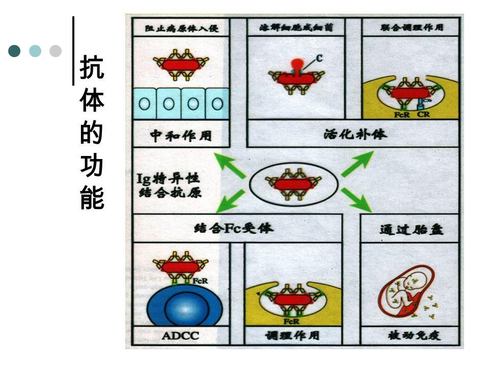 抗体的功能抗体的功能