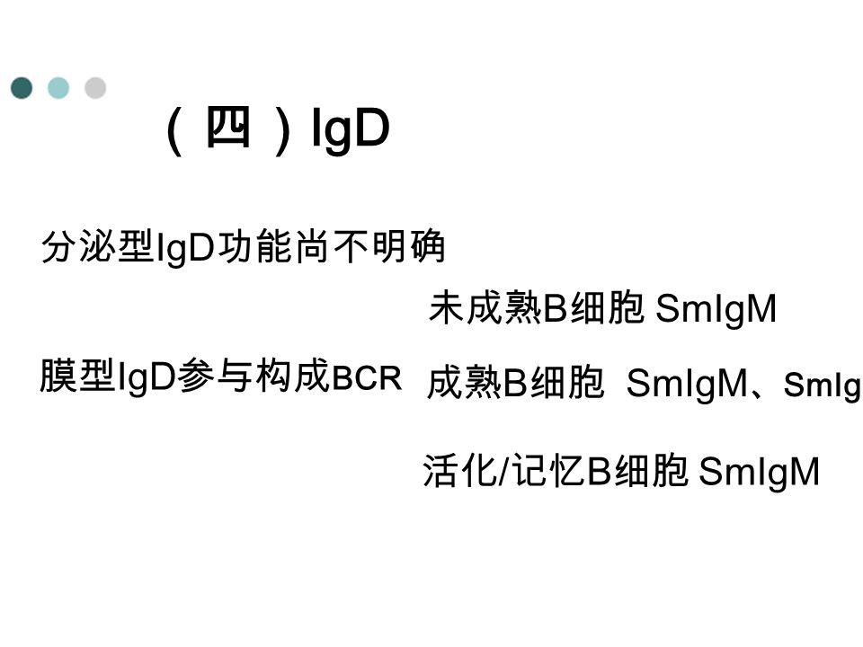 (四) IgD 分泌型 IgD 功能尚不明确 膜型 IgD 参与构成 BCR 未成熟 B 细胞 SmIgM 成熟 B 细胞 SmIgM 、 SmIgD 活化 / 记忆 B 细胞 SmIgM